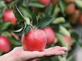 apple khane ke fayde
